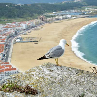 Nazare beach  portugal